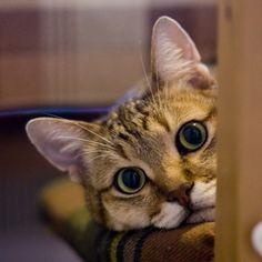 C'est la belle vie - Cat memes - kitty cat humor funny joke gato chat captions feline laugh photo