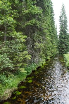 Do you love untouched nature? Then you should definitely get to know the last wilderness in the middle of Europe. The Czech Šumava will surprise you. Color Effect, Czech Republic, Waterfalls, Rivers, Wilderness, Green Colors, Paths, Favorite Things, Country Roads