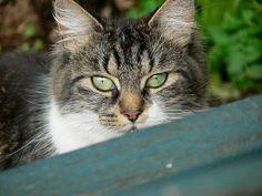 FreebieCat's Cat of The Day August 8, 2015 http://www.freebiecat.com/cat-of-the-day.php