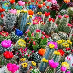 Cheap plant flower pot, Buy Quality succulent seeds directly from China cactus seeds Suppliers: 100pcs  Rare Cactus Seeds Japanese Best-selling  Succulents Seeds Flower Sementes Bonsai Seeds Indoor Plants Flowers Pot