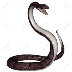 anaconda serpent - Recherche Google