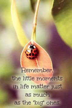 Remember the little things Uplifting Thoughts, Uplifting Words, Peace And Love, My Love, Journey Quotes, Some Quotes, Piece Of Me, Finding Joy, Inspire Me