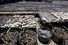 this is disgusting ! ! stop shark finning ! !