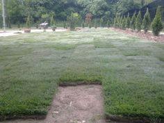 Zanim rozłożymy trawę z rolki należy wcześniej przygotować podłoże oraz dodać do ziemi nawozów, które dostarczą trawie odpowiednich składników odżywczych. Gleba powinna być nawieziona 14 do 7 dni przed rozłożeniem trawy. Można zastosować nawozy wieloskładnikowe (Nawomix, Sierrablen, Florovit, Amofoska, które wzbogacą glebę w odpowiednie składniki odżywcze.