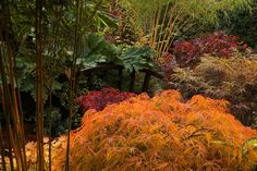 A sea of autumn colour in the middle garden, October 21. I don't know how anything could be more stunning than this one! The texture of the acers is so beautifully captured and the colors so perfect.