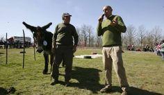 La Feria de San Vitero no volverá a contar con la subasta de burros imagen 4