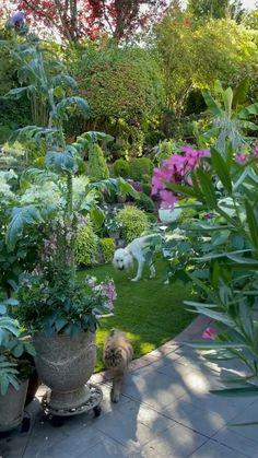 Backyard Patio Designs, Backyard Projects, Backyard Landscaping, Garden Structures, Garden Paths, Planter Accessories, Garden Entrance, City Wallpaper, Small Space Gardening