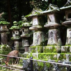 Deer in Ancient Nara Temple  #TFLers #tweegram #photooftheday #20likes #amazing #smile #japan #nara #zen #temple #look #instalike #igers #picoftheday #instadaily #instafollow #followme #instagood #bestoftheday #instacool #instago #all_shots #follow #webstagram #nature #style #tao #Buddhism #love