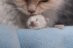 kitten neva 1-day-old with mom