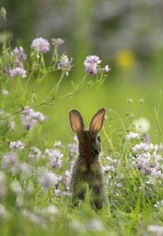 Bunny Love❤️