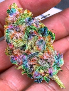 to buy marijuana online can I buy marijuana online in can I find Cannabis in City can I buy cannabis oil online can I get weed online which website can I discuss and buy marijuana do I get weed online with fast delivery near me skunk online Buy Edibles Online, Buy Weed Online, Online Buying, Store Online, Weed Strains, Indica Strains, Weed Edibles, Cbd Oil For Sale, Marijuana Plants