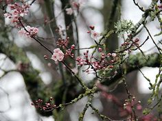 Rings of Spring