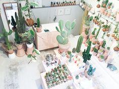 Blog - Cactus Copenhague