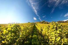 #Jumilla #Vineyards