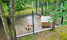 L'histoire et les étapes de la fabrication d'un chenil sur mesure pour deux chiens de chasse fugueurs : une réalisation signée de deux lecteurs de Système D. Poppies, Construction, Outdoor Structures, Pets, Camper, Palette, Life, Farmhouse, Garden