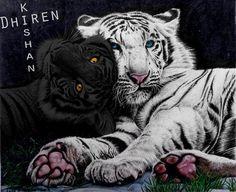 tiger's curse ren and kishan :) my tigers