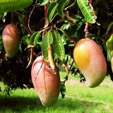 59 Best Fruit Plants Online India
