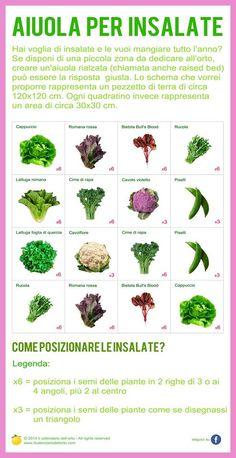 Aiuola per insalate