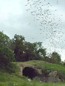 Bamberger Ranch - Texas Hill Country - The Chiroptorium - world's first (successful) man-made bat cave - built to house 1 million bats - tours available