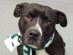 Safe Manhattan Center   1/7/2014.               My Name is Dennis  ID#A0987803.              Pulled by Second Chance Tescue.                Thank you ,gracias ,Danke