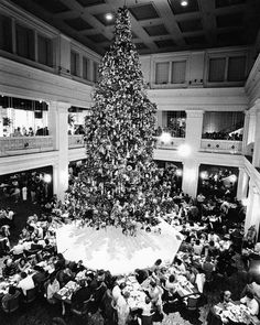 Christmas tree in the Walnut Room of Marshall Fields, 1987.  (Now Macy's) It was a family tradition to each b'fast by this tree every year.  3 stories tall.