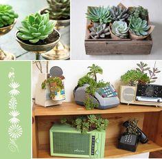plante in ghivece unice
