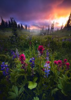 A beautiful fine art photograph titled Vivid Dreams by Daniel Greenwood Photography All Nature, Amazing Nature, Beautiful World, Beautiful Places, Landscape Photography, Nature Photography, Travel Photography, Nature Pictures, Belle Photo
