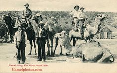 1906 Australia, Camel Ridding Far North, South Australia. Work In Australia, South Australia, Old Pictures, Old Photos, Camelus, Penal Colony, Work With Animals, North South, Historical Photos