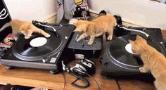 #cats #kitten #DJ #GIFs #LikeaVideoTV Google+