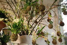 orquideas suspensa