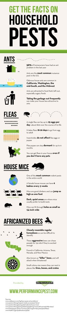 Did you know that 56% of homeowners have had an ant problem in the last year? Take a look at this infographic from a San Jose exterminator to learn more about ants and find out how you can keep them out of your home!