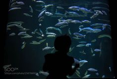 Never bored from looking by abdullrahman9797 #nature #photooftheday #amazing #picoftheday #sea #underwater
