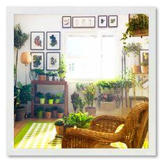 Plants - indoor!