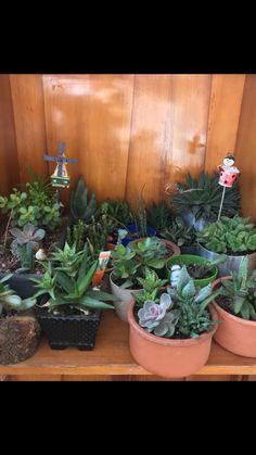 Annemin minik kaktüsleri #scullent #cactus