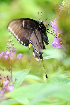 Tips for Planning a Butterfly Garden