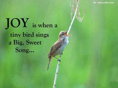 Image result for images of birds singing in the early morning