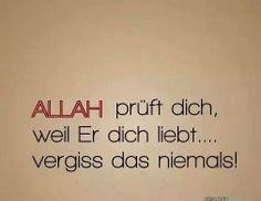 """""""Islam"""" ist die Universität... """"Dunja"""" ist das Klassenzimmer... """"Qur'an""""(+Sunna) ist das Buch bzw. der Unterrichtsstoff... """"Prophet Mohammad (s.a.w.)"""" ist der Lehrer... """"ALLA s.w.t"""" ist der Prüfer... ...Versuche die Abschlussprüfung zu bestehen..."""