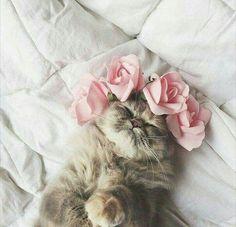 Flores fazem um dia mais bonito de se viver