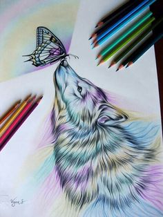 Wolf & butterfly colored pencils art