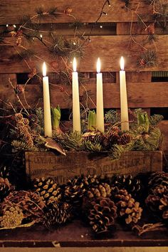Beautiful Advent candles arranged in a vintage wood box with bulbs and greens and pine cones. Perfect for natural rustic winter and Christmas decorating.