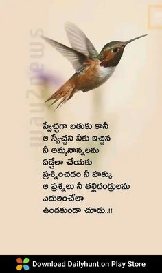 Life Lesson Quotes, Life Lessons, Life Quotes, Inspirational Quotes Pictures, Telugu, Wish, Parents, Deep, Quotes About Life