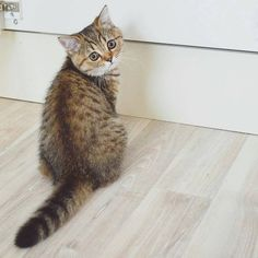 #Cats  #Cat  #Kittens  #Kitten  #Kitty  #Pets  #Pet  #Meow  #Moe  #CuteCats  #CuteCat #CuteKittens #CuteKitten #MeowMoe      Ok, I learned my lesson, can I stop starring at the wall pls? ...   https://www.meowmoe.com/67935/