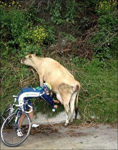 ¡A falta de fuentes... buenas son vacas!