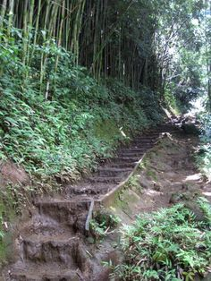 Manoa Falls Hiking, Island of Oahu in Hawaii LOVE this hike, it is easy enough for the whole family.  : )    AND it is very beautiful