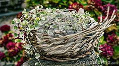 Floral basket, ornament, cozy garden ornament, decoration