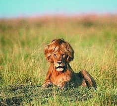 A good hair day.....