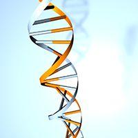 New mechanism in gene regulation revealed