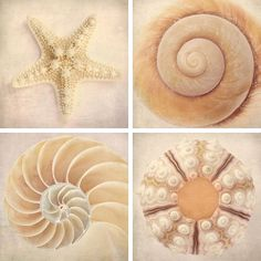 Sea Shell Art Prints