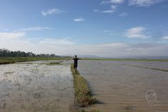 Lasam City ricefields. Philippines, City, Beach, Water, Outdoor, Gripe Water, Outdoors, The Beach, Cities