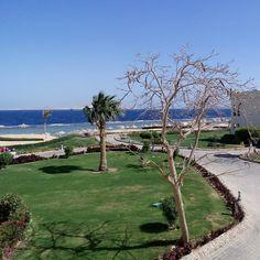 Superior room #vista #sharmelsheikh #seaclubresort #travel #diarioviaggi #egypt #egitto